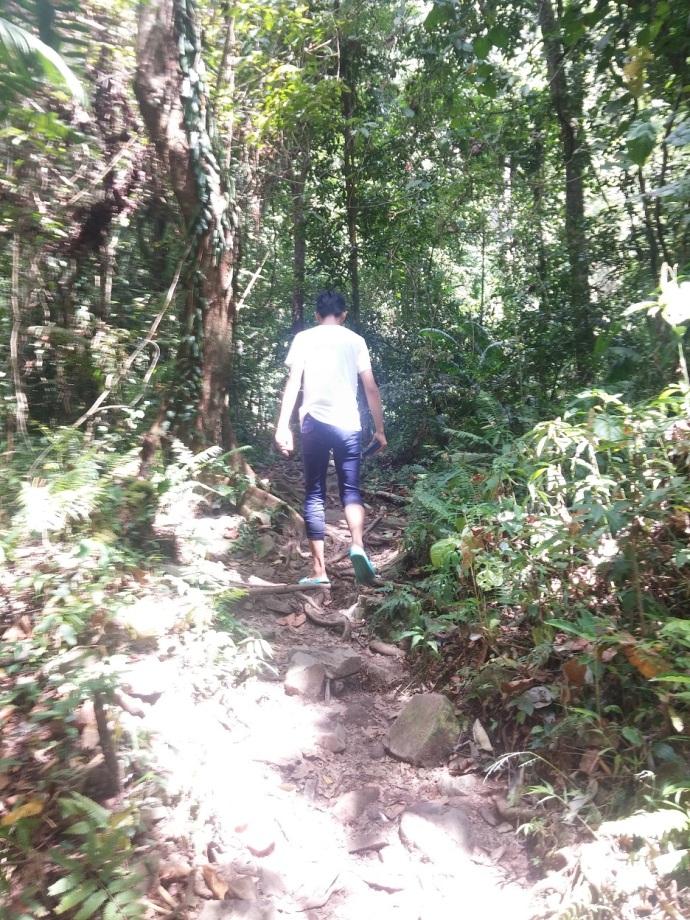 Berjalan Bernuansakan Hutan