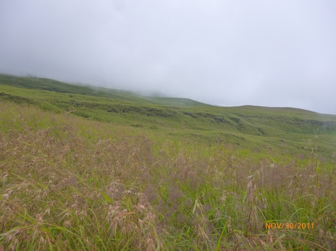 Padang lavender
