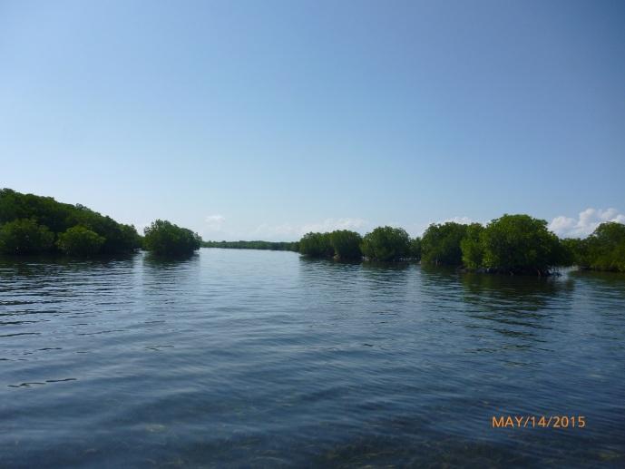 Hutang Mangrove di Tengah Laut