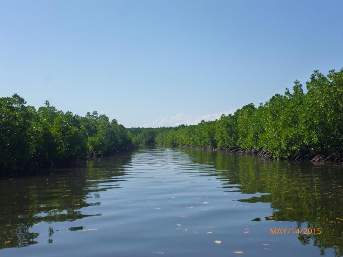 Berlayar Sembari Disaksikan Pohon-Pohon Mangrove di Kanan Kiri