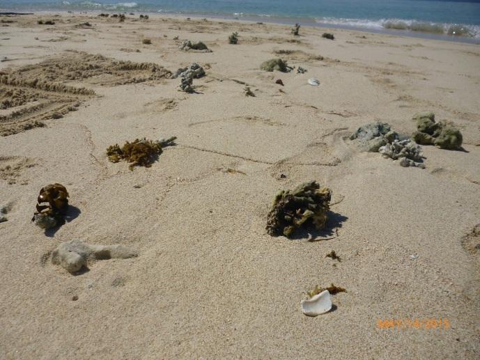 Pasir dan Batu Karang di Gili Kapal