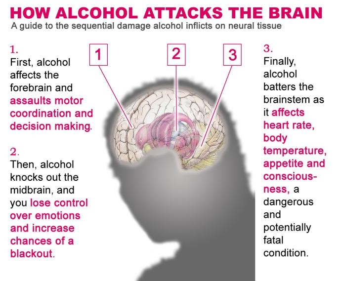 Bagaimana Alkohol Memengaruhi Fungsi Otak. Sumber: margottesch.com.au